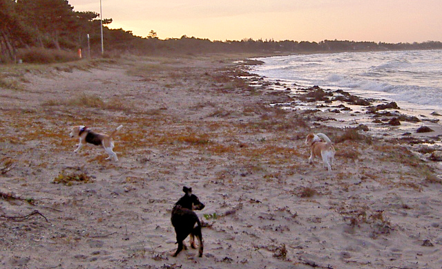 Joey på stranden