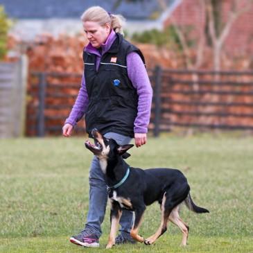 Hundens følelsesmæssige tilstand i træningen